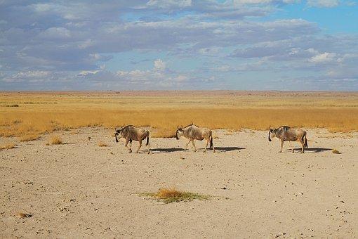 Africa, Safari, Animal World, Nature, National Park