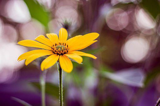Yellow, Flower, Bookeh, Spring, Nature, Bloom, Summer