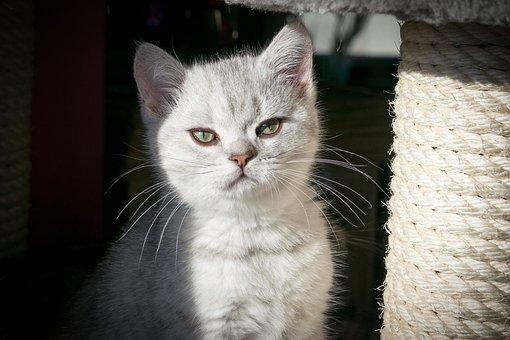 Kitten, Cat, Cat Baby, Domestic Cat, Pet, Cute