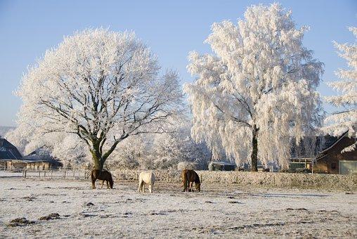 Trees, Snow, Ripe, Landscape, Cold, Winter, Snowy