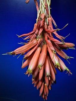 Flower, Cactus, Plant, Flora, Desert, Thorns, Stimulate
