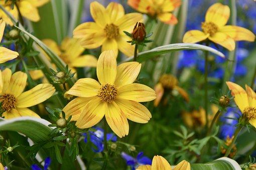 Flower, Flower Yellow, Nature, Flowering Spring, Plants