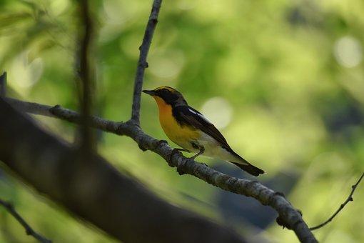 Animal, Forest, Fresh Green, Wood, Bird, Wild Birds