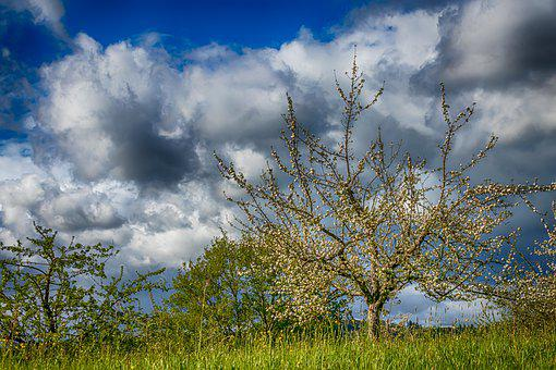 Orchard, Spring, Meadow, Landscape, Nature, Green, Blue