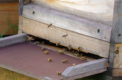 Honey Bee, Beehive, Insect, Beekeeping, Bee Keeping