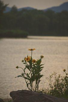 Flower, In Full Bloom, Water, Flowering, Natural, Flora