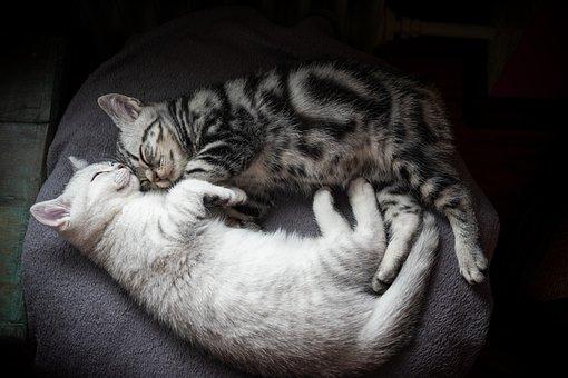 Kitten, Cat, Charming, Cute, Sweet, Pet, Cat Baby