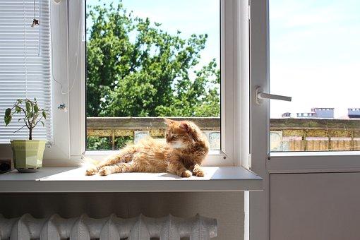 Cat, Kitty, Red, Summer, Rest, Sunny, Home, Feline, Fur