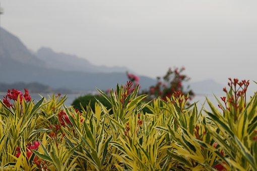 Mountains, Flowers, Landscape, Nature, Unusual Flower