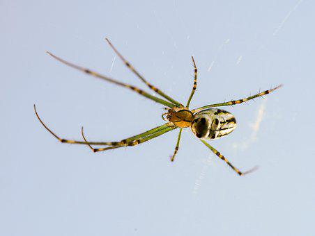 Spider, Nature, Arachnid, Orb Spider, Wildlife