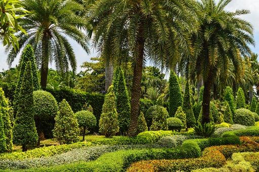 Park, Tropics, Garden, Palm Trees, Tropical Garden