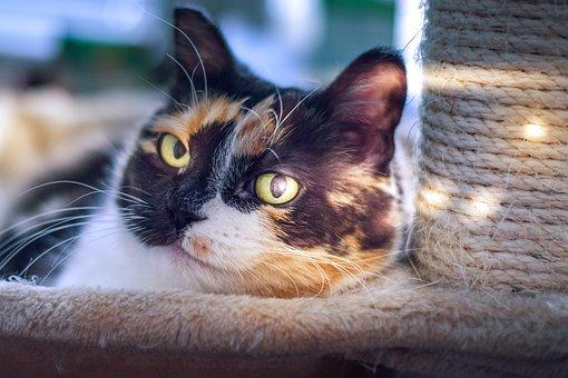 Cat, Light, Pet, The Eyes, Mustache