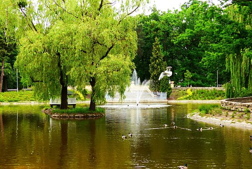 City Park, Pond, Willow, Fountain
