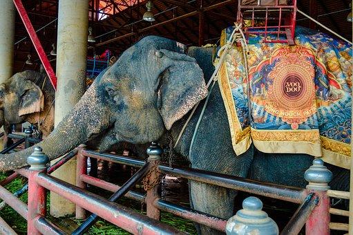 Elephants, Elephant, Cambodia, Mammal, Animals