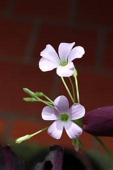 Two, Cute Flowers, Purple, Violet, Beautiful, Sweet