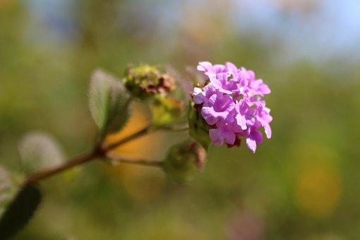 Flower, Violet, Plant, Purple, Garden, Flora, Spring