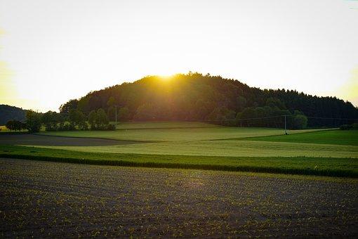 Forest, Meadow, Fields, Field Of Rapeseeds, Sunset