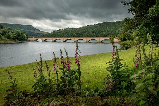 Ladybower Reservoir, Derbyshire, Flowers, Foxgloves