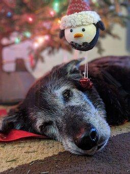 Dog, Black Lab, Labrador, Black, Friend, Adorable