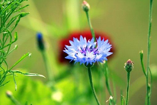 Blueberry, Flower, Nature, Garden, Spring, Fleuri