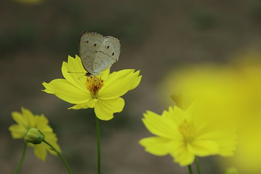 Butterfly, Yellow Flower, Gardening, Closing Wings