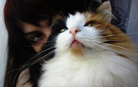 Cat, Mustache, Snout, Person, Girl, Portrait, Eyes