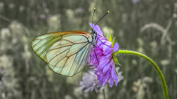 Butterfly, Insect, Gassed, Colorful, Flower