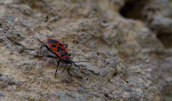 Stone, Beetle, Insect, Nature, Ladybug, Stones, Leaf
