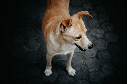 Look, Standing, Dog, Alone, Animal, Looking, Portrait