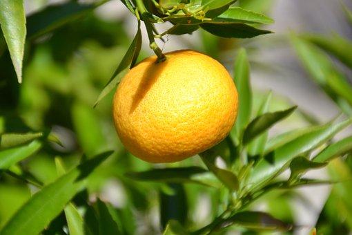 Mandarin, Fruit, Vitamins, Citrus Fruit, Delicious