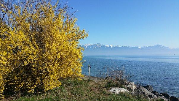 Lake Geneva, Lausanne, Morges, Lake, Mountains