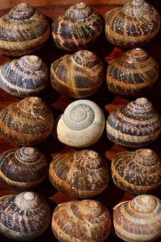 Snails, Snail Shells, System, Organization, Rule, Neat