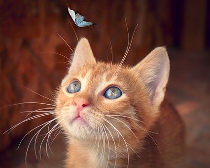 Cat, Butterfly, Kitten, Baby Cat, Red, Mackerel