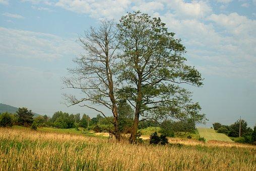 Tree, Emotions, Mood, Landscape, Romantic, Figure