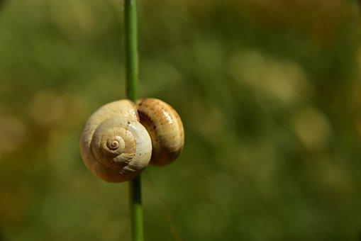 Shell, Snail, Wait, Break, Slowly, Rest, Halm