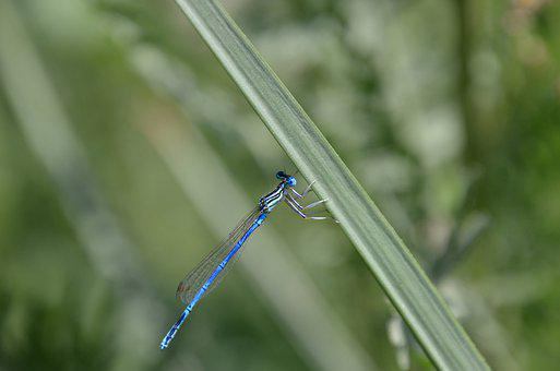 Dragonfly, Grass, Green, Insect, Wings, Blue, Summer