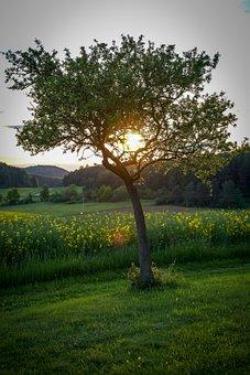Tree, Meadow, Apple Tree, Pear, Sun, Mood, Romantic