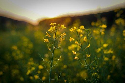 Flowers, Daisies, Bush, Bloom, Green, White Yellow