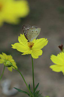 Butterfly And Flower, Yellow, Wild, Garden, Green