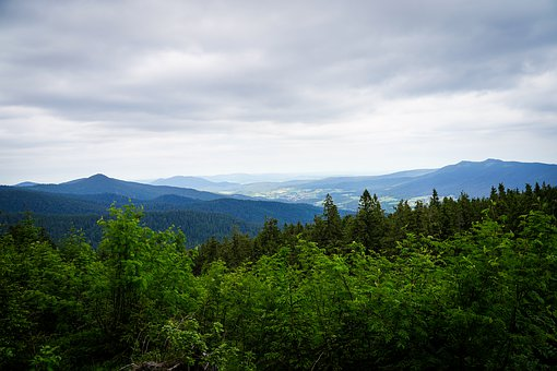 Arber, Mountain, Bavarian Forest, Summit, Meadow