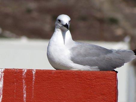 Seagull, Bird, Ocean, Sea, Beach, Gull, Animal, Feather