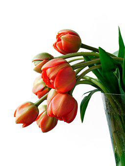 Shiny Raindrops, Little Shiny, Red Tulips, Beautiful