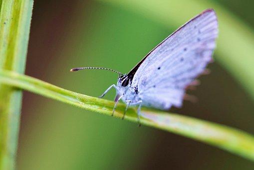 Butterfly, Green, Nature, Summer, Grass, Demoiselle