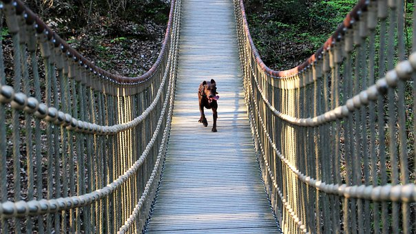 Dog, Bridge, Nature, Water, Courage, Animal
