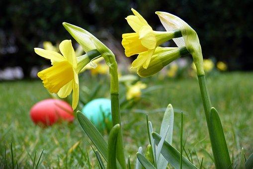 Narcissus, Easter, Flower, Easter Egg, Spring