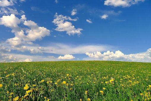Landscape, Nature, Spring, Meadow, Flower Meadow