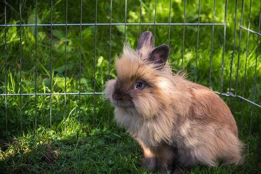 Rabbit, Pet, Garden, Lionhead, Bunny, Cute, Easter