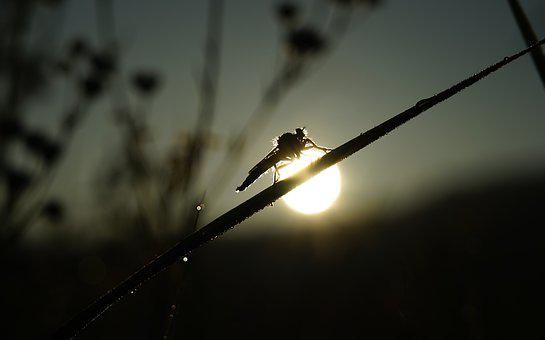 Dragonfly, Sun, Morning, Grass, Summer, Nature, Insect
