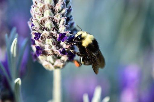 Bee At Work, Hairy Bee, Big Bee