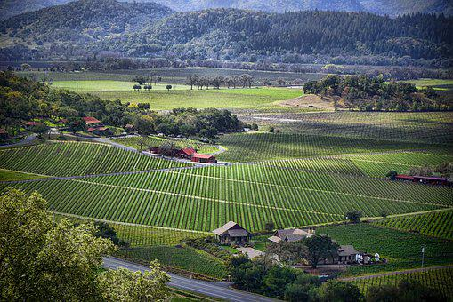 Nap Valley, Vineyards, Landscape, Agriculture